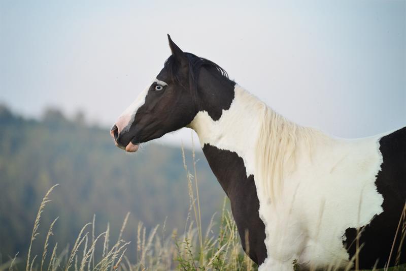 Ein Pferd fürs Leben – Verkaufspferde der Waldrand Ranch